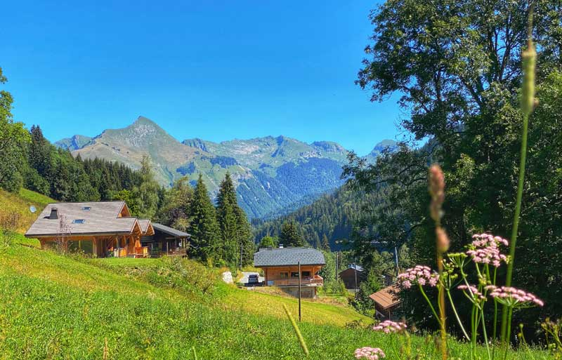 Blue sky, rich green countryside with alpine flowers in the summer in Les Gets