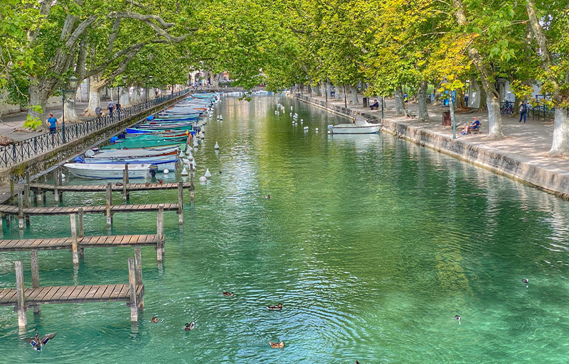Clear waters of a canal in Annecy, ducks floating under shady trees