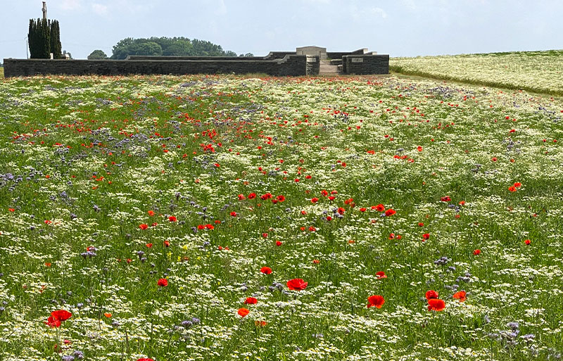 Poppies and cornflowers bloom at Sheffield Memorial Park, Somme