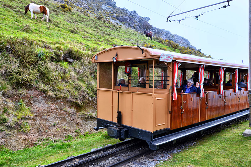 Alpine railway train with wooden carriages passes grassy mountains where horses graze