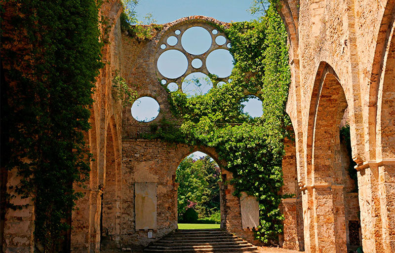 Stone ruins of an abbey, ivy growing through empty rose window frame