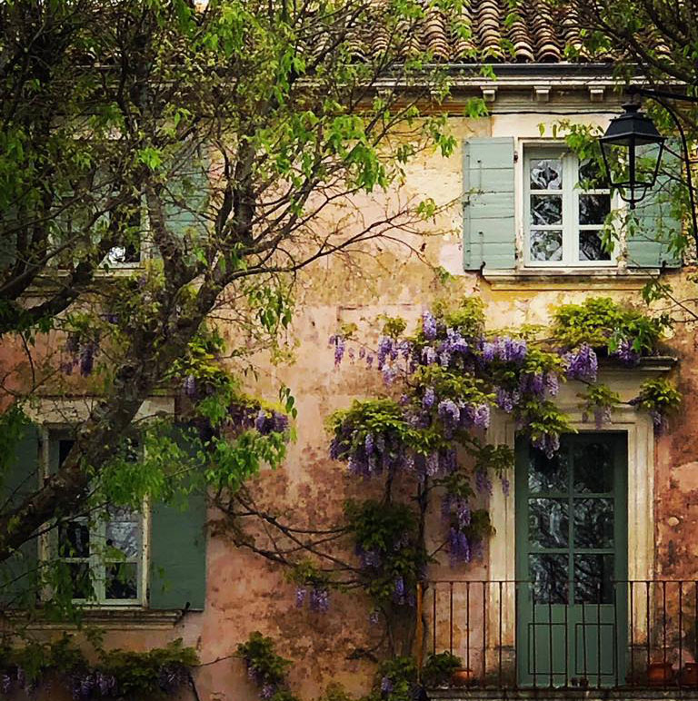 Wisteria growing round green door of a house in Provence