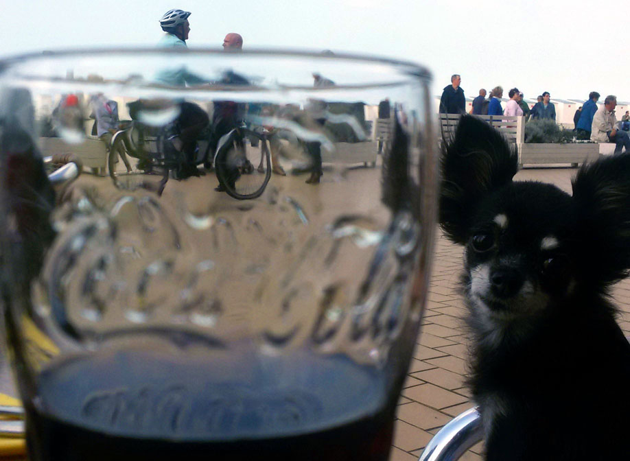Chihuahua and coke - A road trip through Germany, and other ways to pass the time (Part 2): Brussels and Nieuwpoort