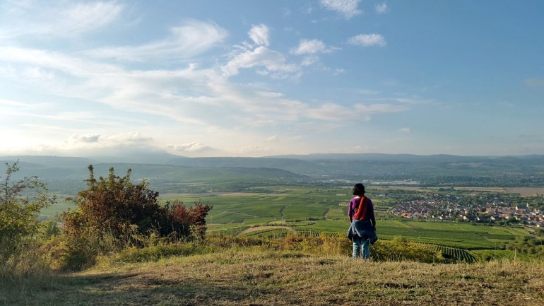 View of the valley from the hills above Gau Algesheim, Germany - travel photos
