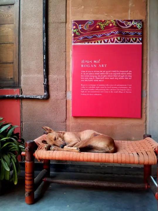 Gujarat_Bhuj_KhamirCraftResourceCenter_DoggieOnKhat - The colours of Kutch