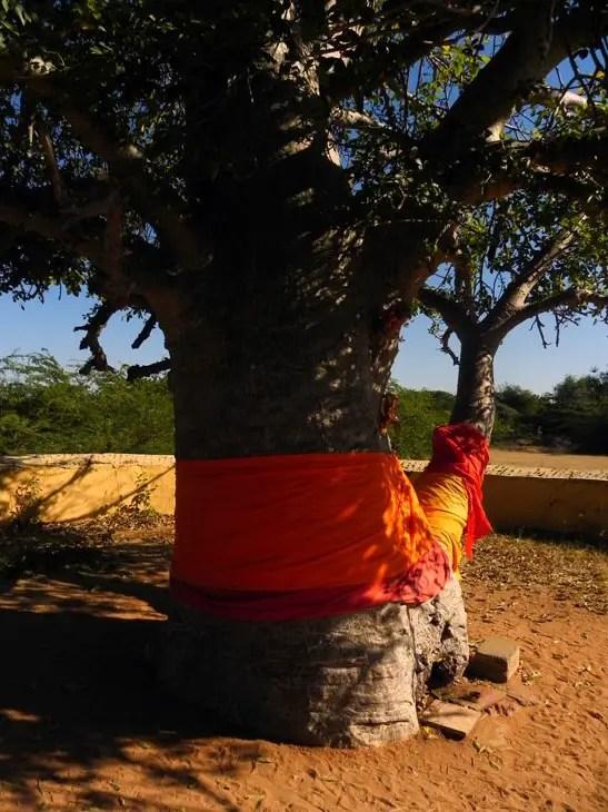 Gujarat_Kutch_Sacredtree - The colours of Kutch