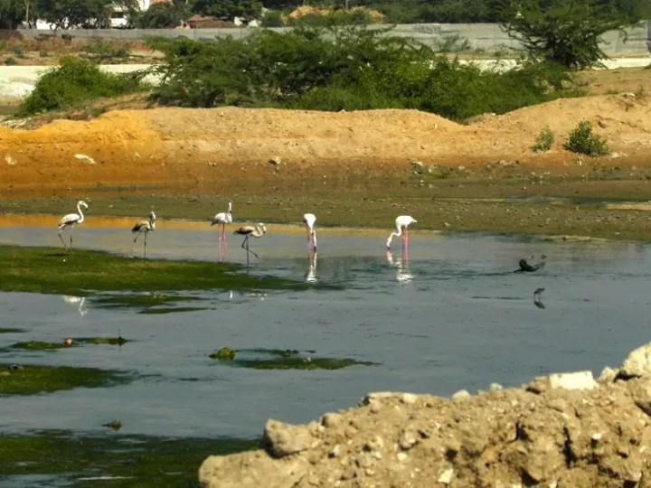 Gujarat_Mandvi_Flamingoes