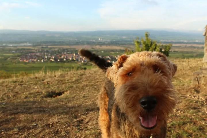 View with Taps - Gau Algesheim