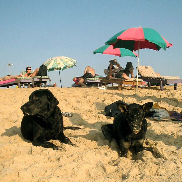 Beach dogs - Eight things every first-time dog owner should do (and one that they shouldn't)