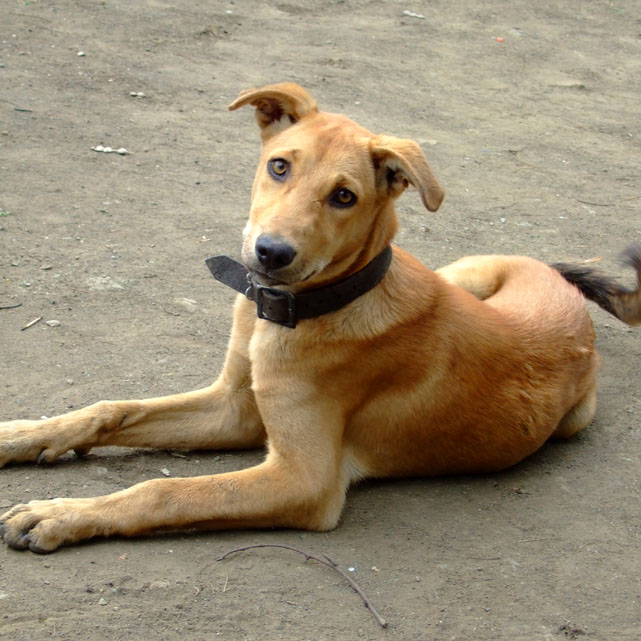 Doggie at Lonar - Eight things every first-time dog owner should do (and one that they shouldn't)