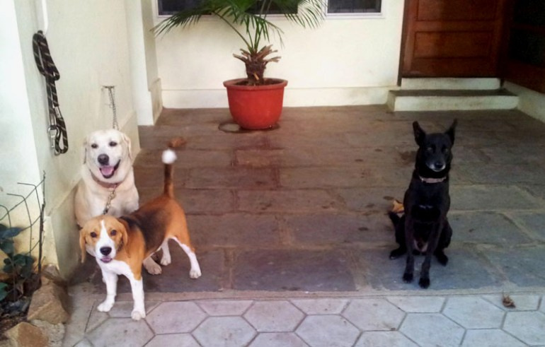 Dogs in Jubilee Hills - Eight things every first-time dog owner should do (and one that they shouldn't)