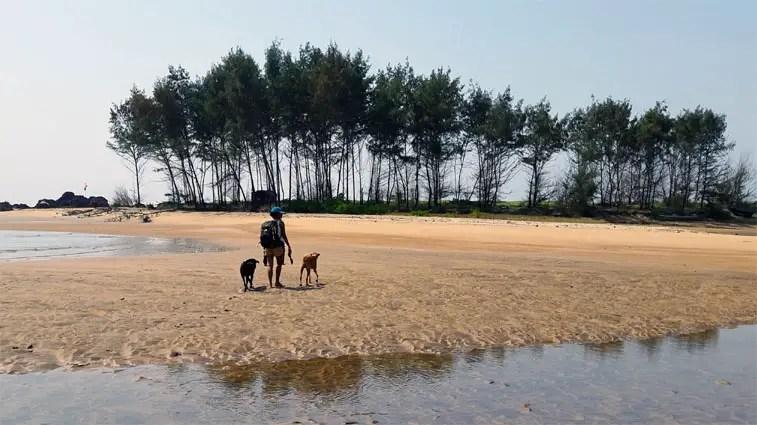 Two stray dogs accompany us on Galgibaga beach