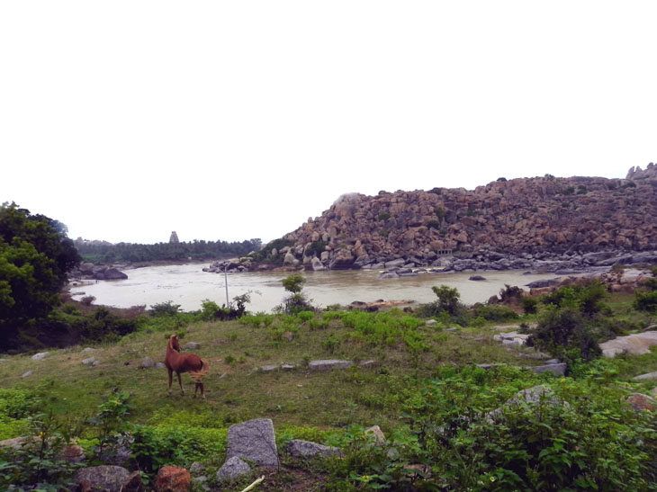 Hampi_RiversidePath_HorseAndTemple - Magical sights of Hampi