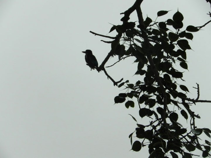Hampi_RiversidePath_Kingfisher - Magical sights of Hampi
