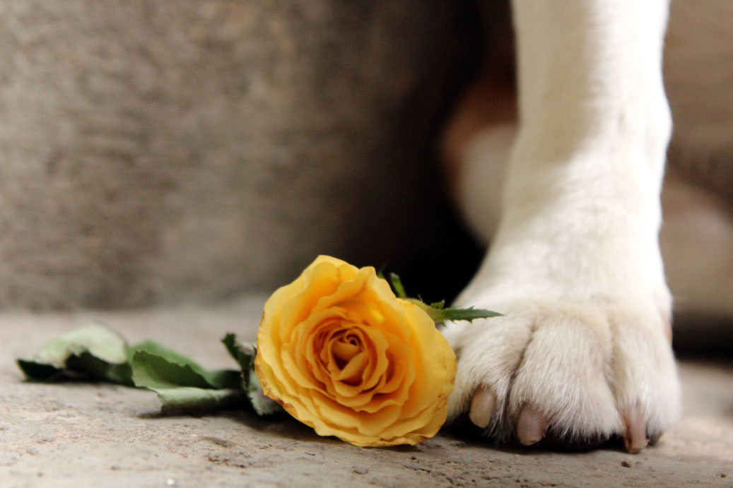 Dog paw and rose - Eight things every first-time dog owner should do (and one that they shouldn't)