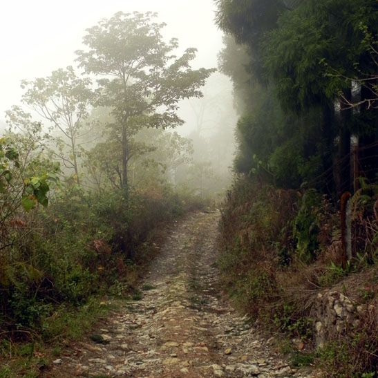 A mysterious misty road on Deolo Hill, Kalimpong, West Bengal, India - an escape from the summer heat
