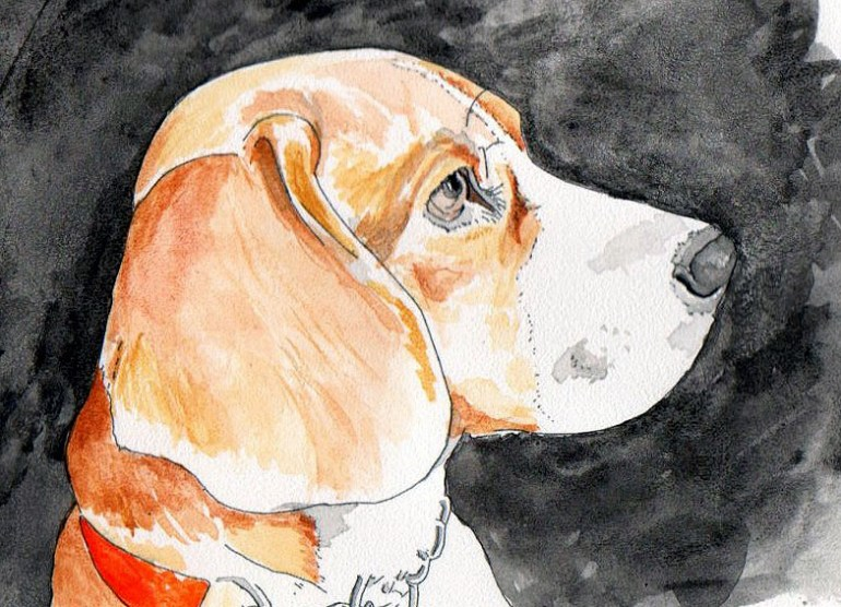 Watercolour portrait of beagle dog, eight things dog owners should do - top 10 posts
