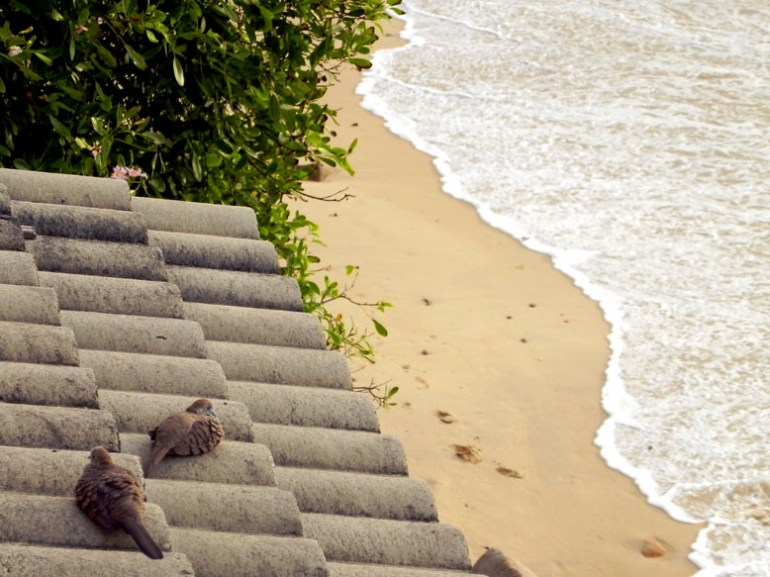 Doves rest on a tiled roof below our rooftop cafe on Mahe