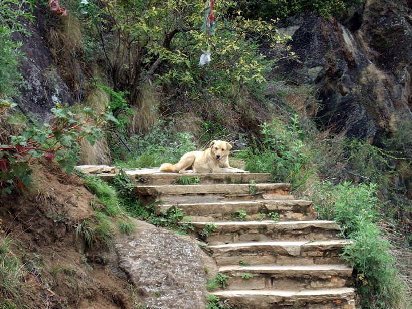 Bhutan - Takstang doggie 2