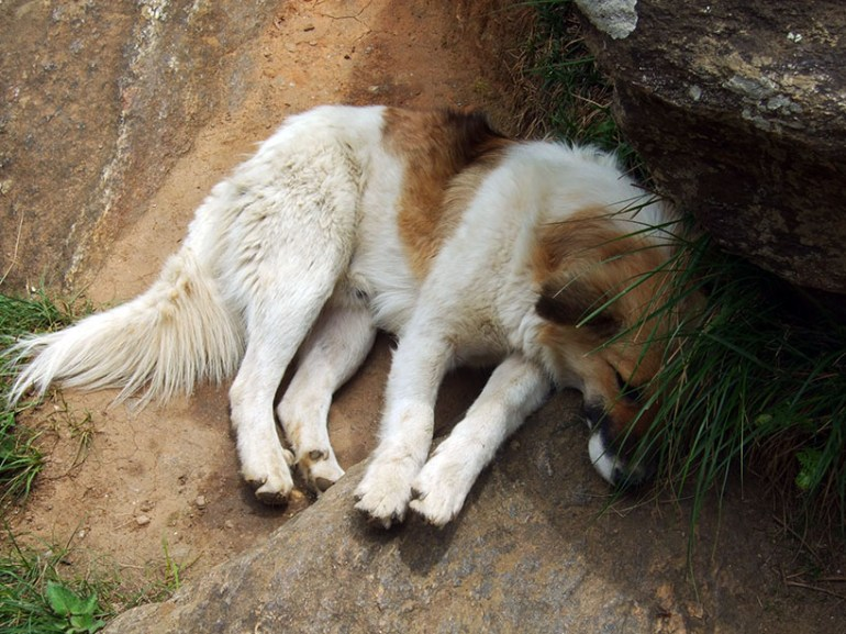 Bhutan - Takstang doggie