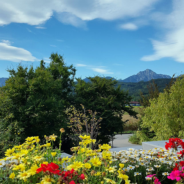 Flowers, trees, mountains - Ainring, Salzburg and the Jenner: A road trip through Germany, and other ways to pass the time (Part 5)