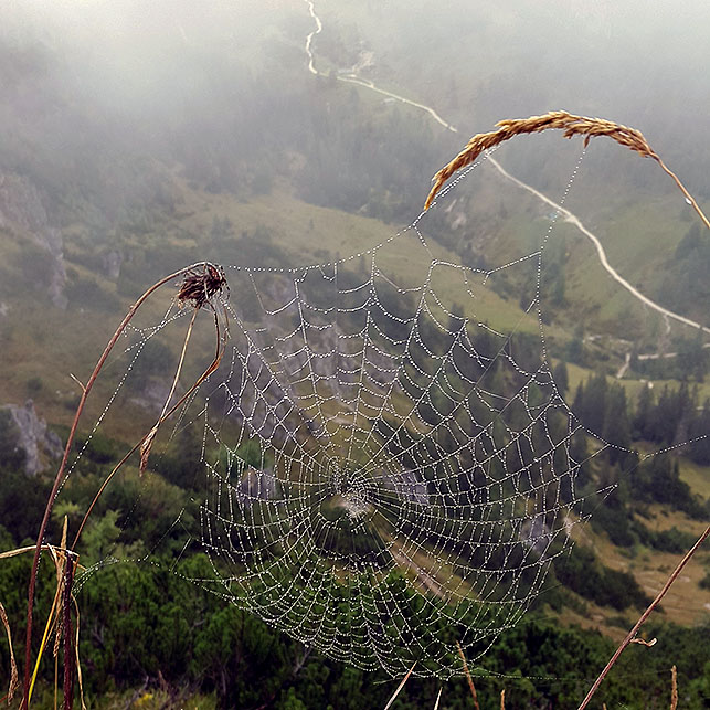 Spider web - Ainring, Salzburg and the Jenner: A road trip through Germany, and other ways to pass the time (Part 5)