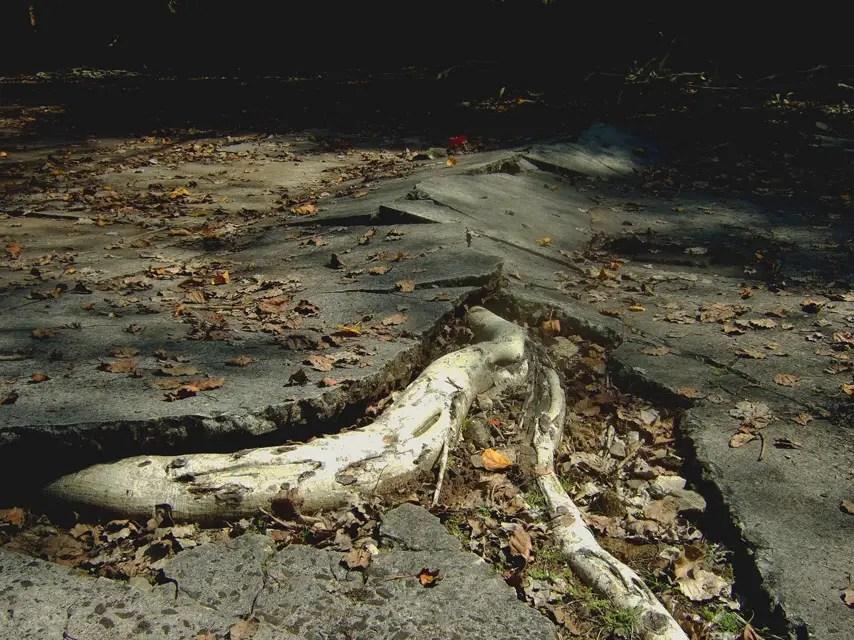 Andamans-Ross-Disruptive root