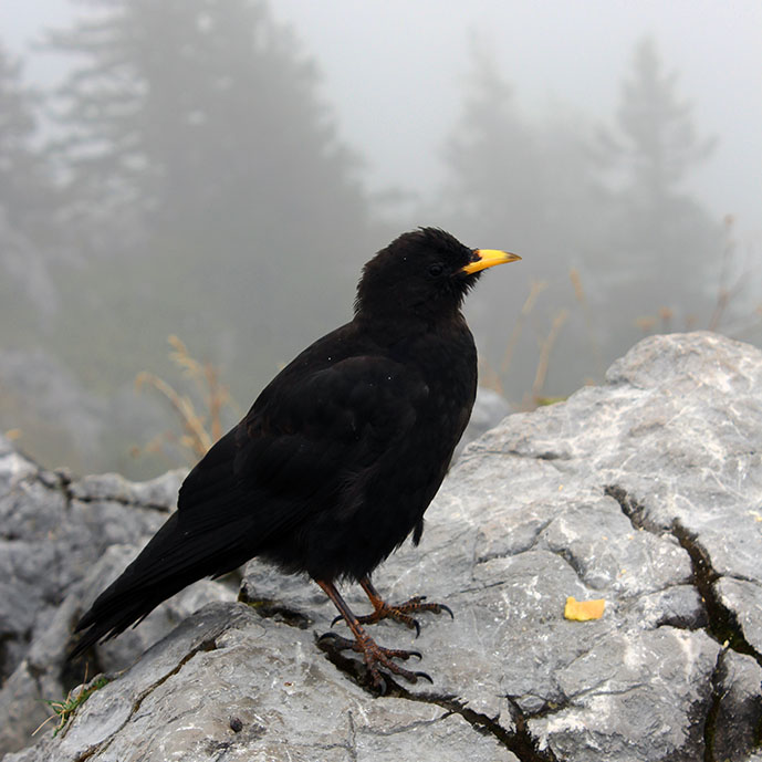 Blackbird on rocks - Ainring, Salzburg and the Jenner: A road trip through Germany, and other ways to pass the time (Part 5)