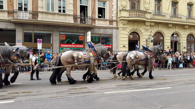 Munich - Parade horses - Munich and the Oktoberfest: Part 6 of A road trip through Germany, and other ways to pass the time