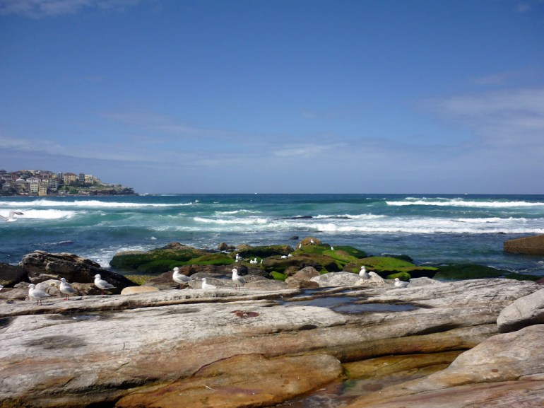 Seagulls among the rocks at Bondi beach - beach pictures from around the world