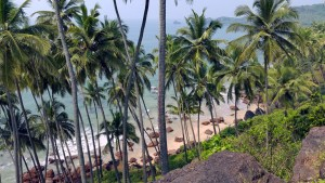 Palm trees on Cabo de Rama beach, Goa, India