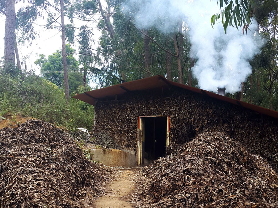 Coonoor - Tea plantation - Eucalyptus hut 1