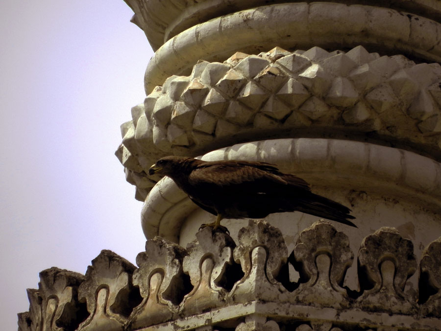 Kite on minaret