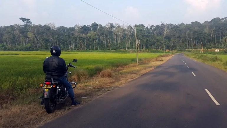 Coorg - Bike rice fields