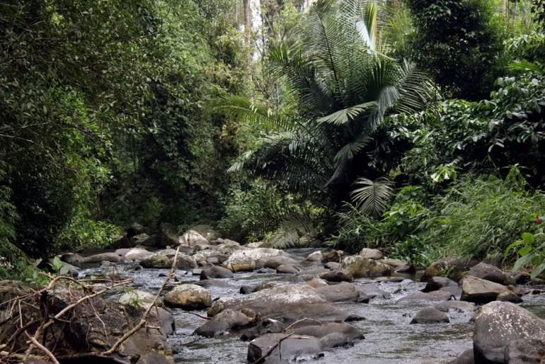 Coorg - Chomakund stream downstream
