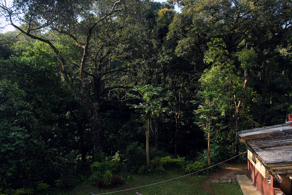 View from our bedroom window at the Depot Estate Homestay in Madikeri, Coorg, India - Unique hotels in India
