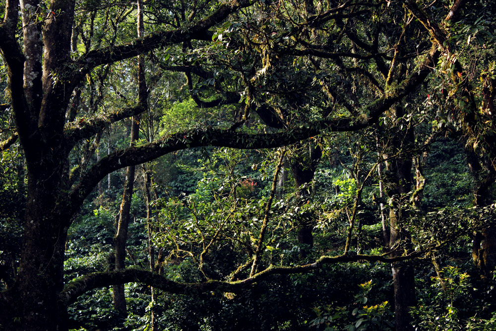 Coorg - Depot estate - Jungle book