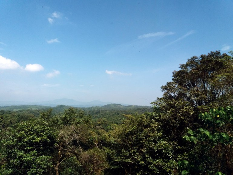 Coorg - Taj view - Forest view