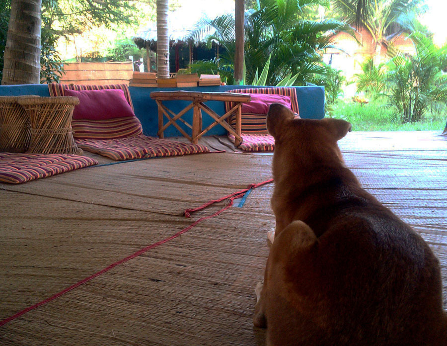 Agonda - eating and acco - sitout and doggie at Tutti - perfect base for a Goa trip