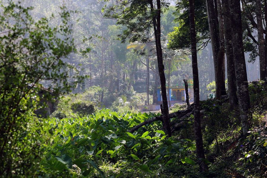 Forest temple near Valparai - winter holiday destination