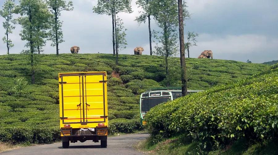 Valparai - NCF - Elephant crossing.jpg
