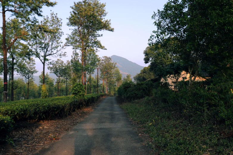 Tea plantation road at sunset in Valparai, Anamalai Hills, Tamil Nadu, India