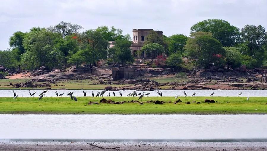 Birds and inspection bungalow, Pocharam lake, Medak, Telangana, India