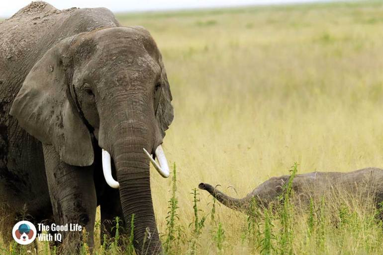 An elephant and her baby in Amboseli National Park - How to plan your Kenya safari from India