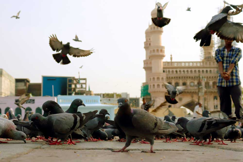 Pigeons get breakfast at Mecca Masjid  in the morning - the best time to visit Charminar