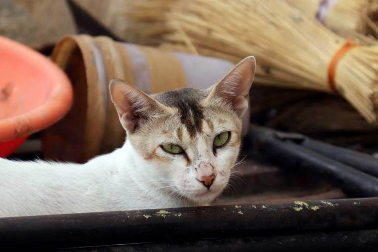 Cat at Mecca Masjid, Charminar