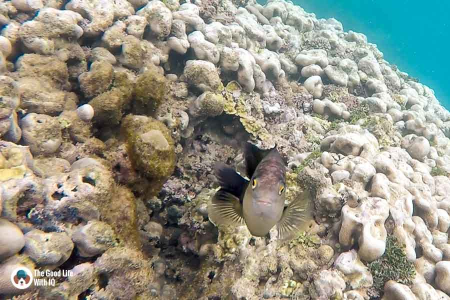 Reef fish - malindi marine national park