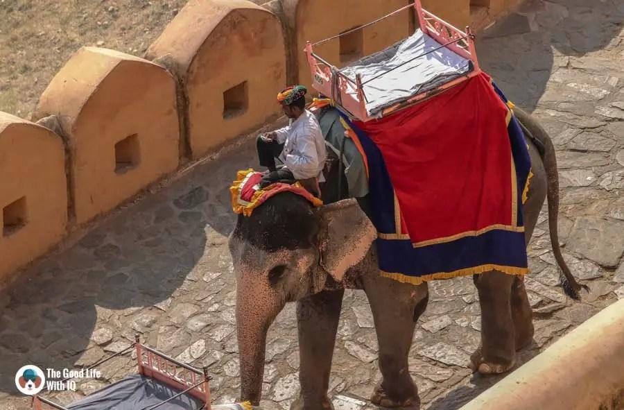 Mahout, Amber Palace, Jaipur