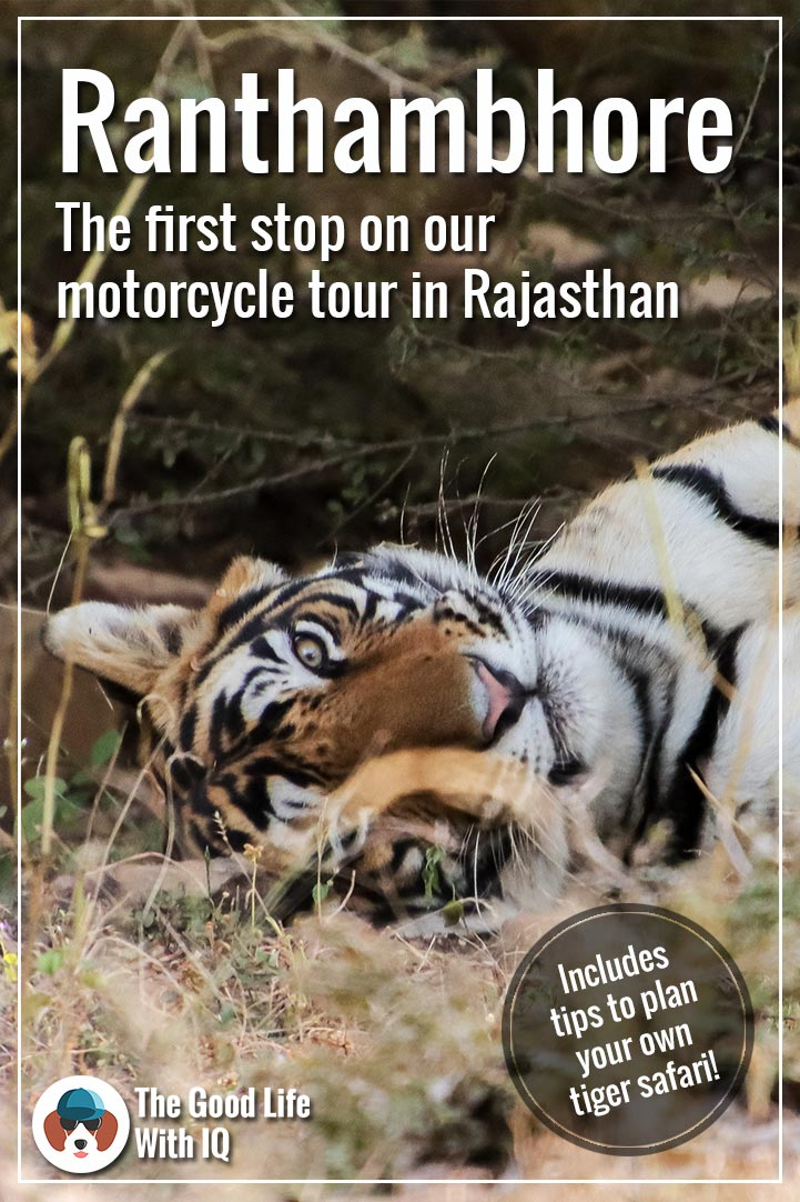Pinterst thumbnail - Ranthambhore safari