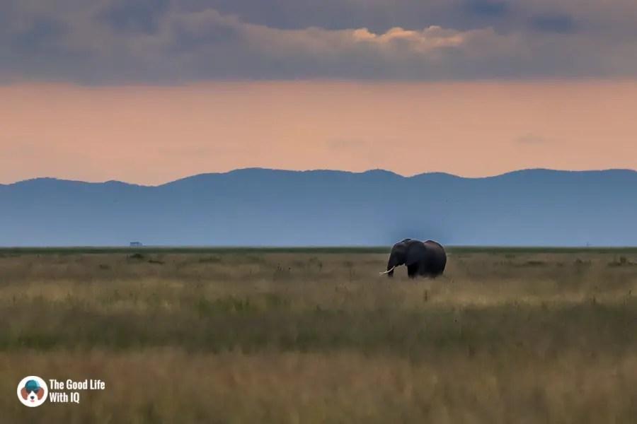 Kenya safari - Amboseli - Elephant